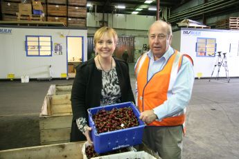 Tasmanian cherries bound for China
