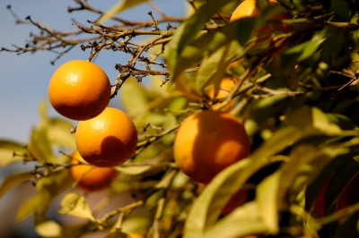 ABARES Outlook 2013 – future food, future farming
