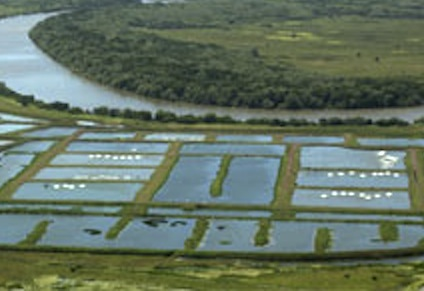 Barramundi Farm Expands in NT