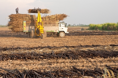 Australia sugar production forecast drops after crop damage