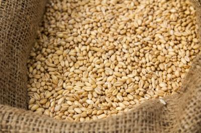 Australia expects bumper crop despite 3% wheat cut