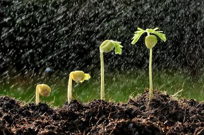 Solid rains bring bumper crops