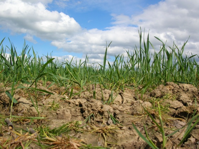 WA's Dry Season Response to aid growers facing production losses