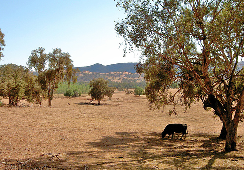 Australia drought  Image credit: flickr User: missmandyjane