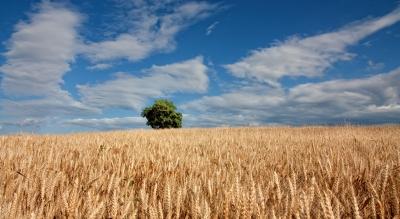 Sumitomo Corp acquires Emerald Grain