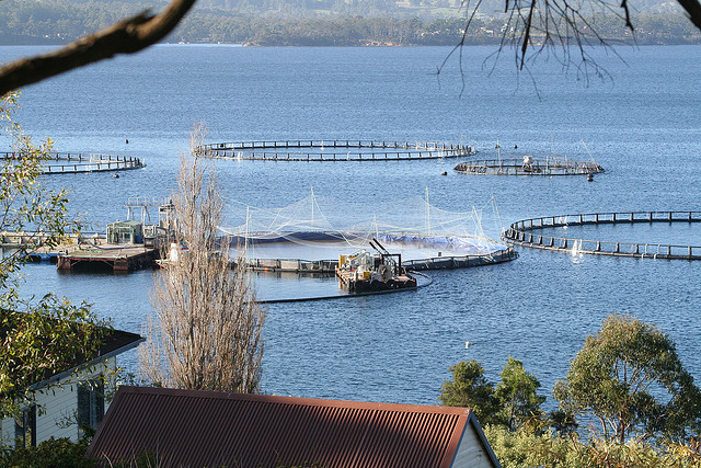 Tasmanian salmon producer receives major sustainability recognition