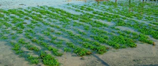 Australia must capitalise on its seaweed potential, marine biologists say