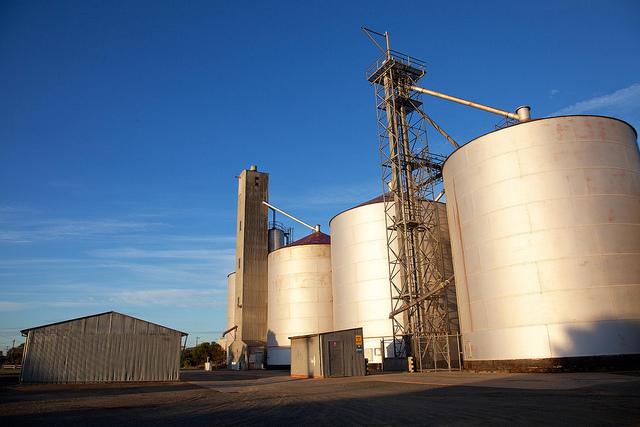 Australia's GrainCorp profit shrinks as takeover talks linger on