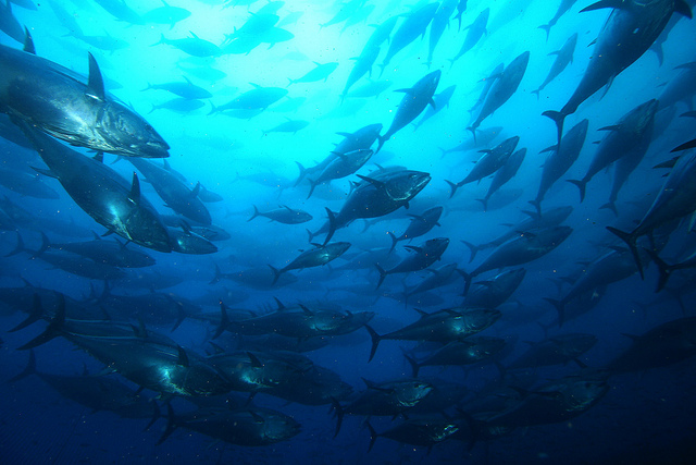 News changes to secure healthy, sustainable Australian fisheries