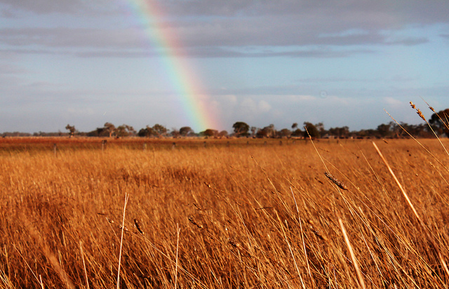 SA set for above average grain crop