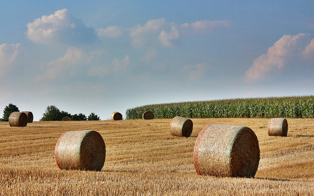 Victorian Coalition to support establishment of a new Rural and Farming Legal Centre