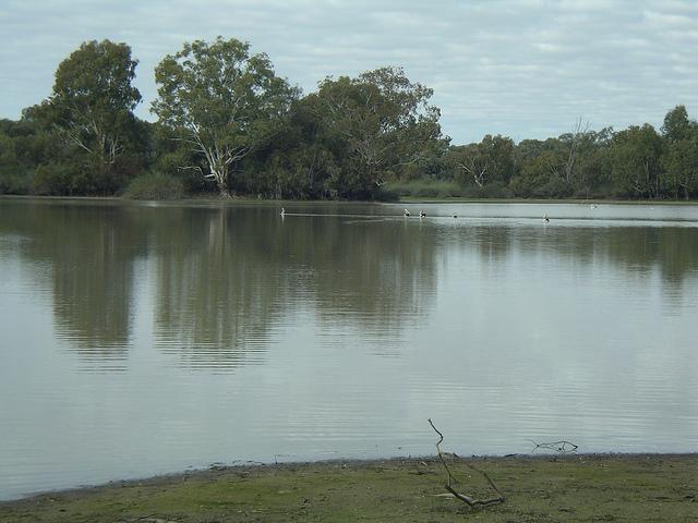 River Murray Image credit: flickr user: WEA Ramblers