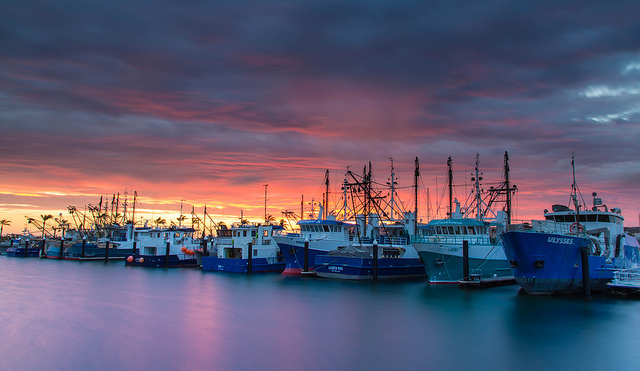 Prawn vessels from the Spencer Gulf fishery tied up at the Port Lincoln Cove Marina for the summer break. Image credit: flickr user: Bazz Hockaday