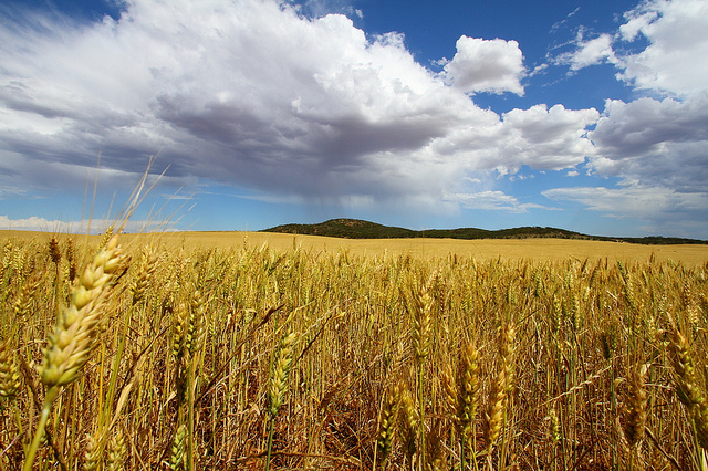 Bad weather affects crop quality