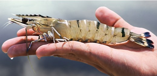 $1.45bn Sea Dragon aquaculture project to create 1,600 jobs in the Northern Territory