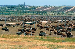 TRANSIT mapped the path of about 60,000 origin-to-destination movements representing 20 million cattle transported in Australia per year Image credit: www.csiro.au