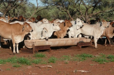 Beef grants up for grabs in WA